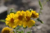 Flower_10113.jpg