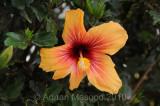 Flower_10114.jpg