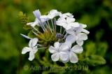 Flower_10115.jpg