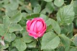 Flower_10116.jpg