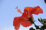 Flower_10117.jpg