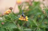 Flower_10118.jpg