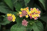 Flower_10119.jpg