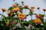 Flower_10120.jpg