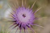 Flower_10122.jpg