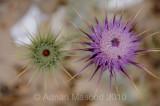 Flower_10123.jpg