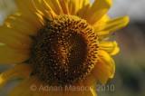 Flower_10124.jpg