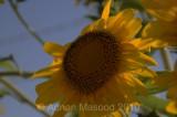 Flower_10125.jpg