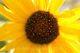 Flower_10126.jpg