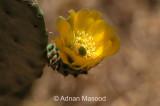 Cactus_0162.JPG