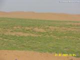 Between Qunfadah and Al-Leith 1.JPG