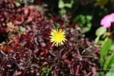 Spring Flowers in SA - 002.JPG