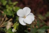 Spring Flowers in SA - 004.JPG