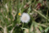 Spring Flowers in SA - 005.JPG