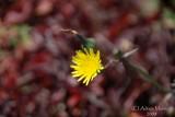 Spring Flowers in SA - 006.JPG