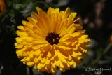 Spring Flowers in SA - 007.JPG