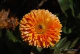 Spring Flowers in SA - 010.JPG