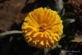Spring Flowers in SA - 011.JPG