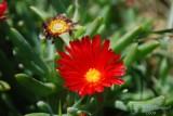 Spring Flowers in SA - 012.JPG