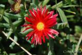 Spring Flowers in SA - 013.JPG