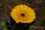 Spring Flowers in SA - 014.JPG