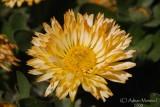 Spring Flowers in SA - 015.JPG