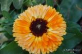 Spring Flowers in SA - 018.JPG