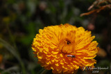 Spring Flowers in SA - 020.JPG