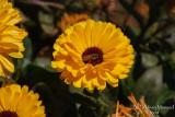 Spring Flowers in SA - 022.JPG