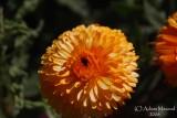 Spring Flowers in SA - 024.JPG