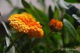 Spring Flowers in SA - 026.jpg