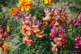 Spring Flowers in SA - 029.JPG