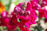 Spring Flowers in SA - 031.JPG