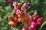 Spring Flowers in SA - 033.JPG