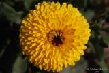 Spring Flowers in SA - 036.JPG