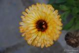 Spring Flowers in SA - 038.JPG