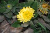 Spring Flowers in SA - 039.JPG