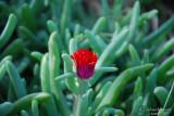 Spring Flowers in SA - 040.JPG