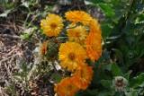 Spring Flowers in SA - 041.JPG