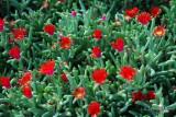 Spring Flowers in SA - 042.JPG