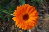 Spring Flowers in SA - 043.JPG