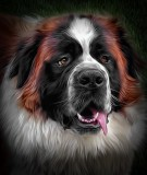 Our Saint Bernard, Max
