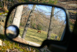 A horse in my mirror