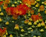 FLOWERS AT THE VAN WINGERDEN OPEN HOUSE (2)