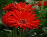 FLOWERS AT THE VAN WINGERDEN OPEN HOUSE (4)