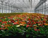 FLOWERS AT THE VAN WINGERDEN OPEN HOUSE (5)