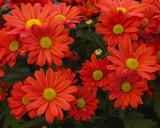 FLOWERS AT THE VAN WINGERDEN OPEN HOUSE (6)