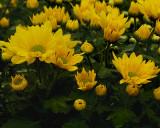 FLOWERS AT THE VAN WINGERDEN OPEN HOUSE (7)