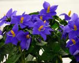 FLOWERS AT THE VAN WINGERDEN OPEN HOUSE (12)