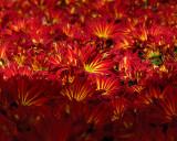 FLOWERS AT THE VAN WINGERDEN OPEN HOUSE (13)